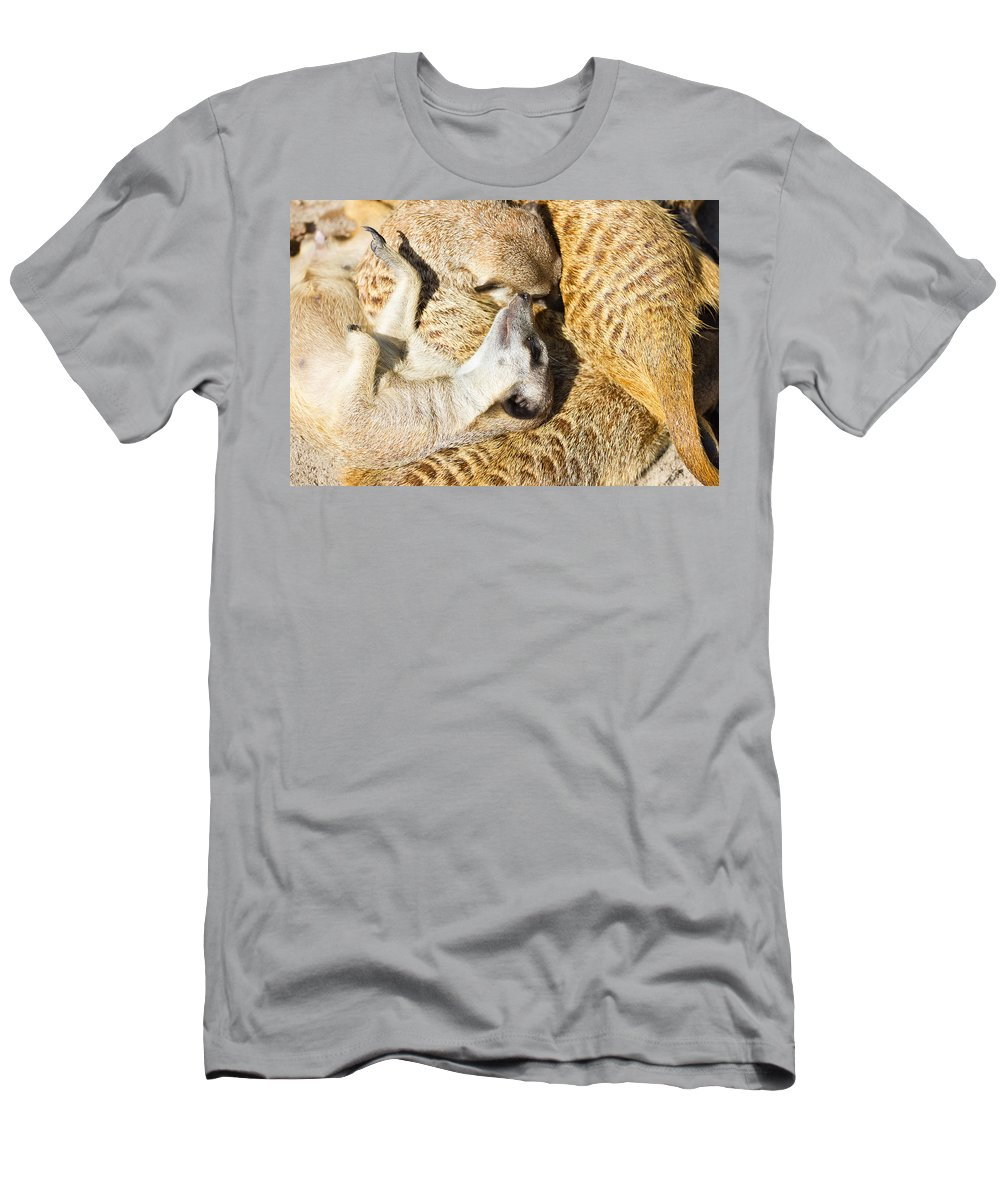 Meerkat Men's T-Shirt (Athletic Fit) featuring the photograph Meerkat Group Resting by Pati Photography
