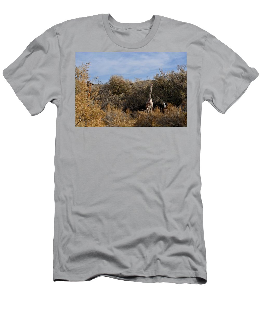 Melba Men's T-Shirt (Athletic Fit) featuring the photograph Momma And Baby Giraffe by Image Takers Photography LLC - Carol Haddon