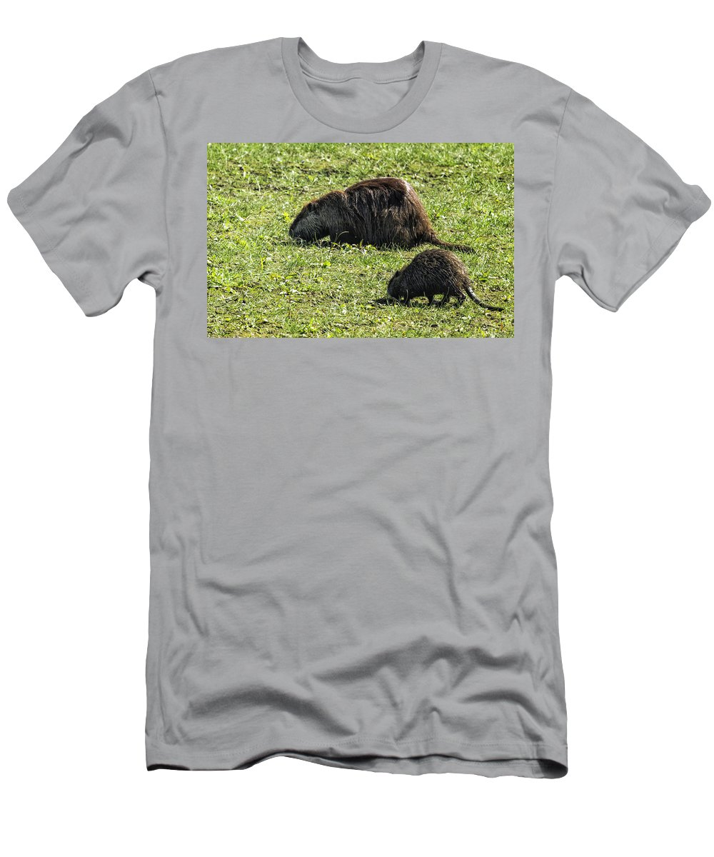 Coypu Men's T-Shirt (Athletic Fit) featuring the photograph Mother And Child - Coypu - Nutria by Belinda Greb