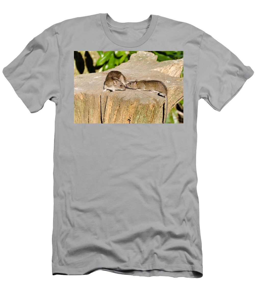 Animal Men's T-Shirt (Athletic Fit) featuring the photograph Mother Rat With Youngster by David Head