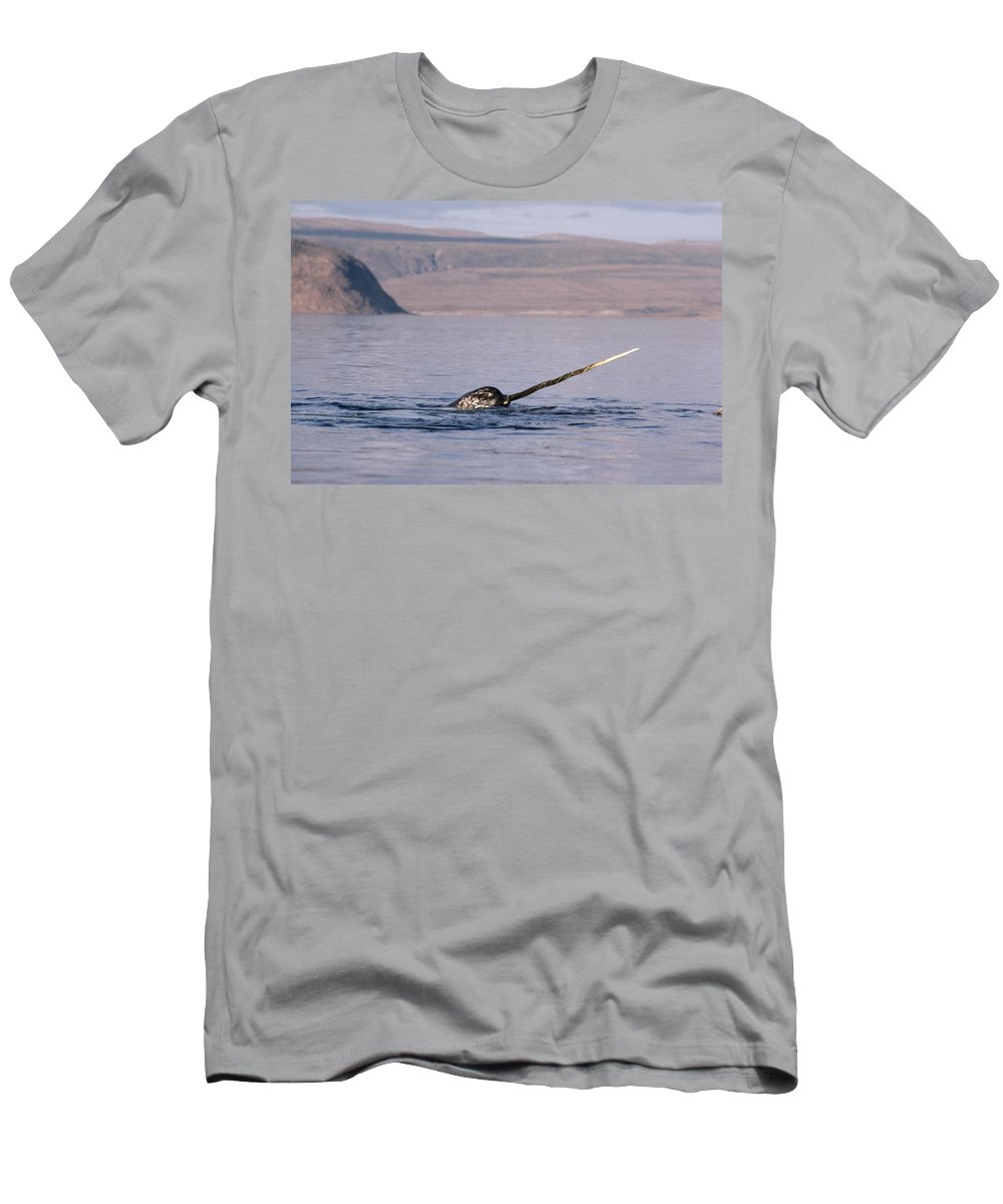 Feb0514 Men's T-Shirt (Athletic Fit) featuring the photograph Narwhal Surfacing Baffin Isl Canada by Flip Nicklin
