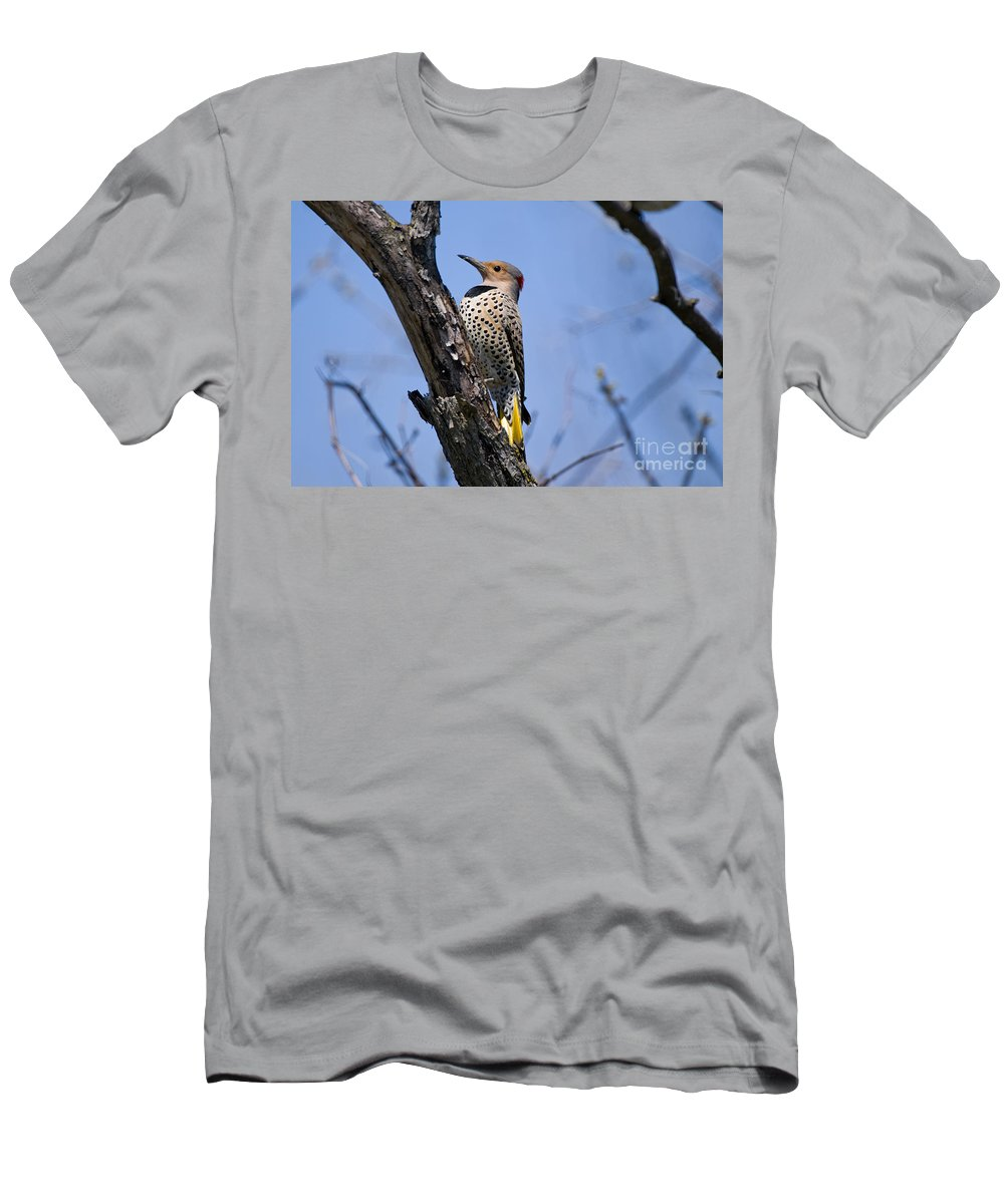 Northern Flicker Men's T-Shirt (Athletic Fit) featuring the photograph Northern Flicker Pictures 8 by World Wildlife Photography