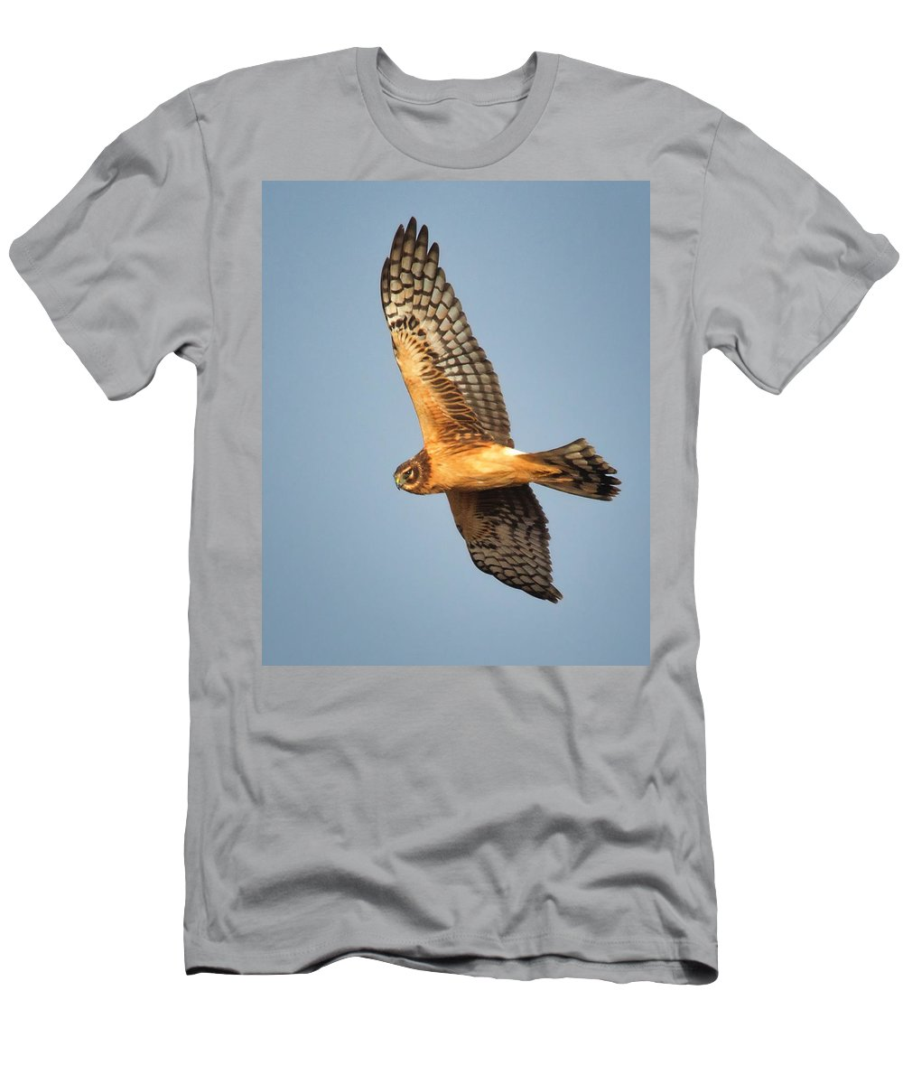 Norther Harrier Men's T-Shirt (Athletic Fit) featuring the photograph Northern Harrier by Bob Stevens