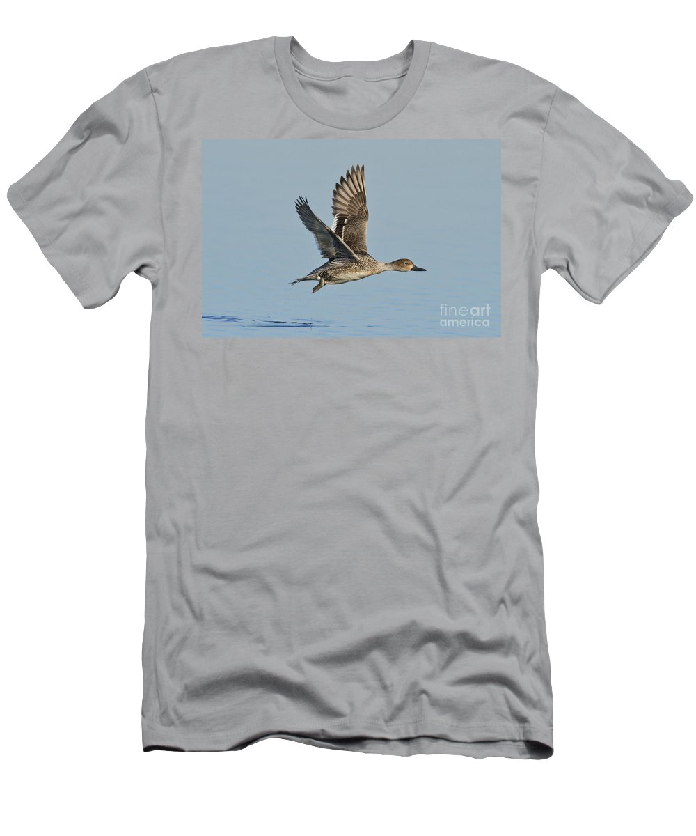 Northern Pintail Men's T-Shirt (Athletic Fit) featuring the photograph Northern Pintail Hen by Anthony Mercieca