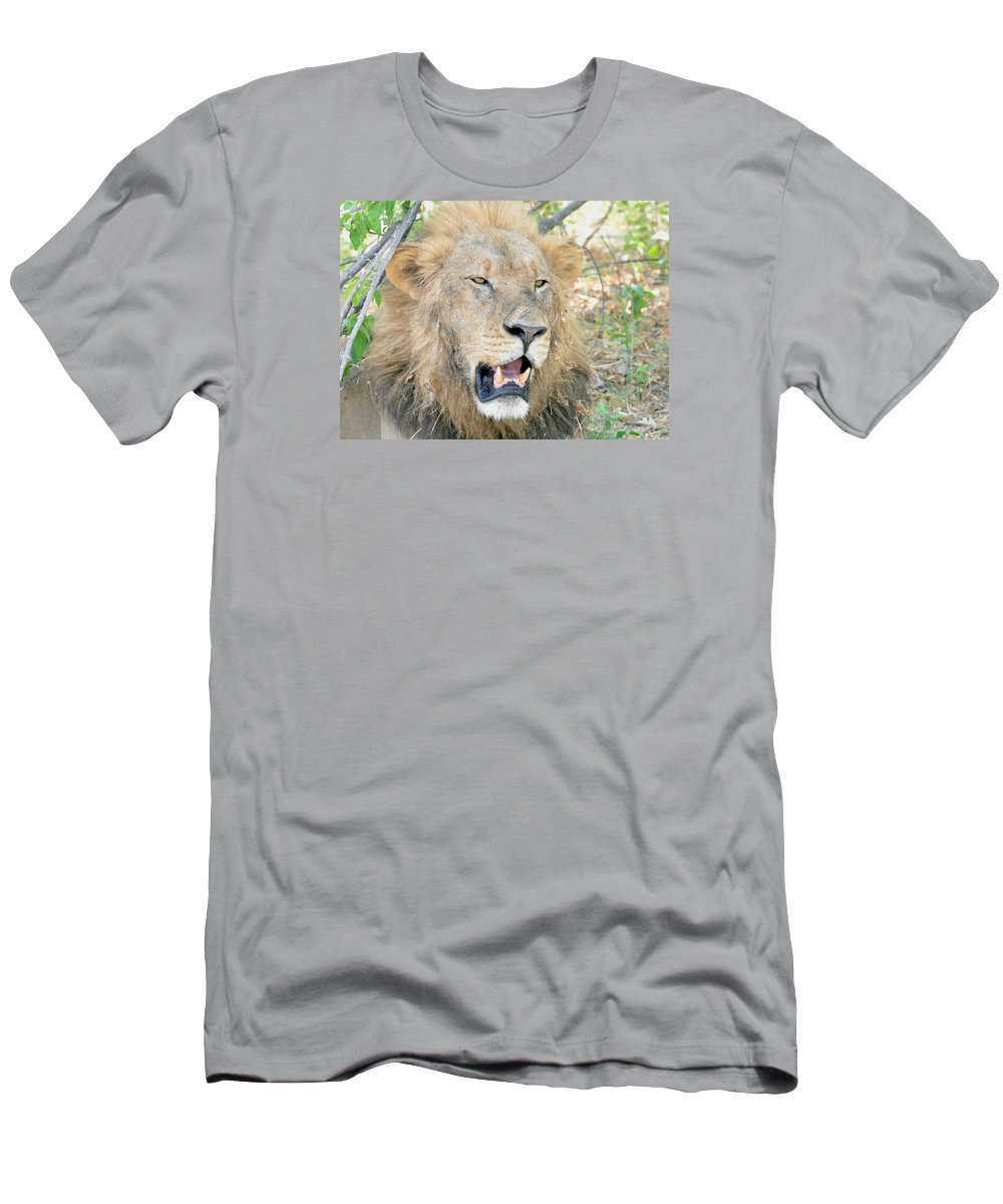 Botswana Men's T-Shirt (Athletic Fit) featuring the photograph A Lion Talks by Tom Wurl