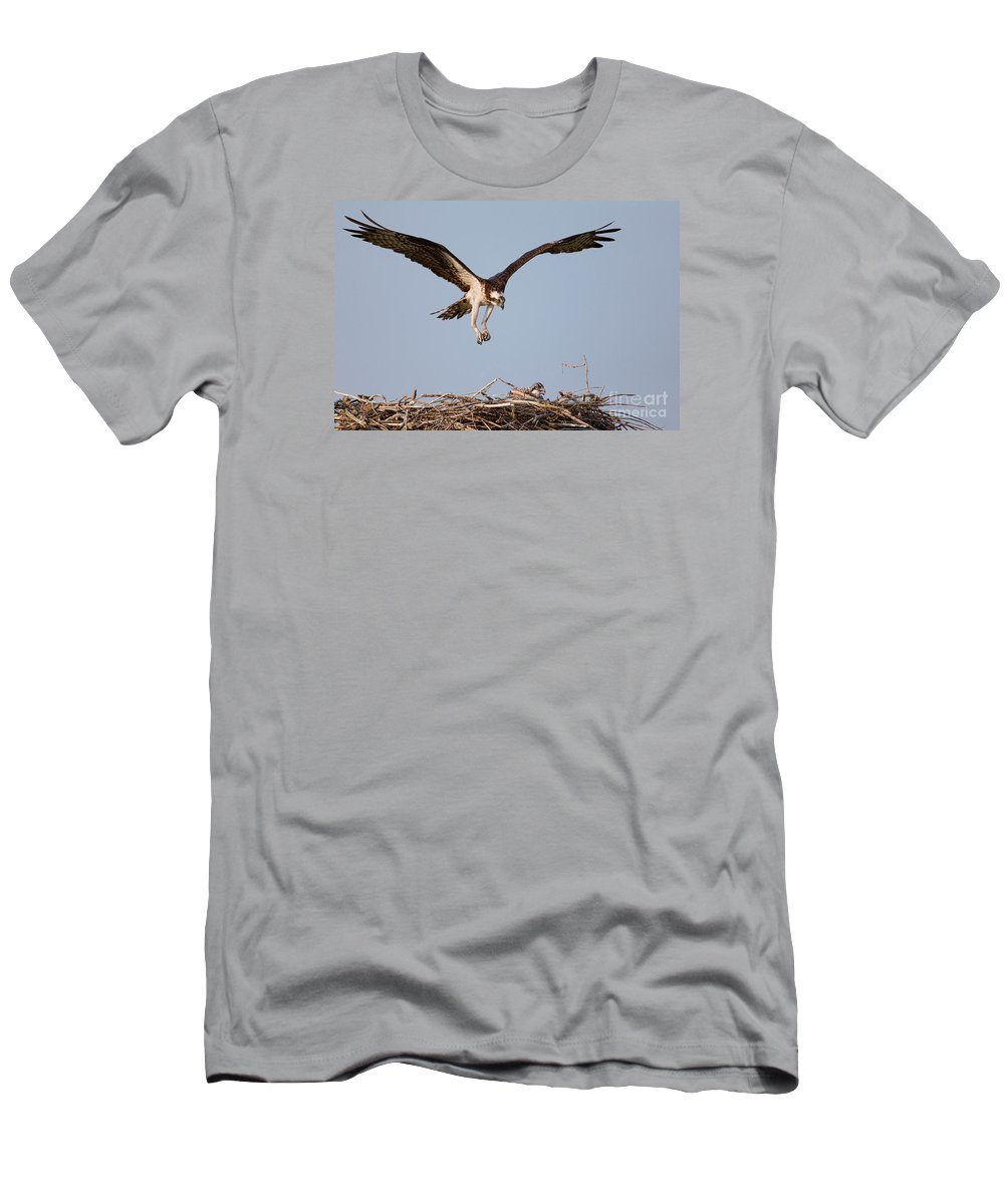 Osprey Men's T-Shirt (Athletic Fit) featuring the photograph Osprey Returning To Nest by Jerry Fornarotto
