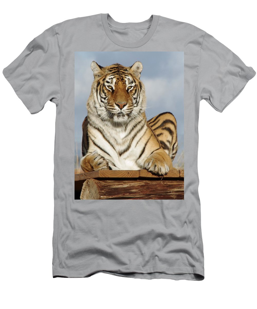 Out Of Africa Men's T-Shirt (Athletic Fit) featuring the photograph Out Of Africa Tiger 4 by Phyllis Spoor