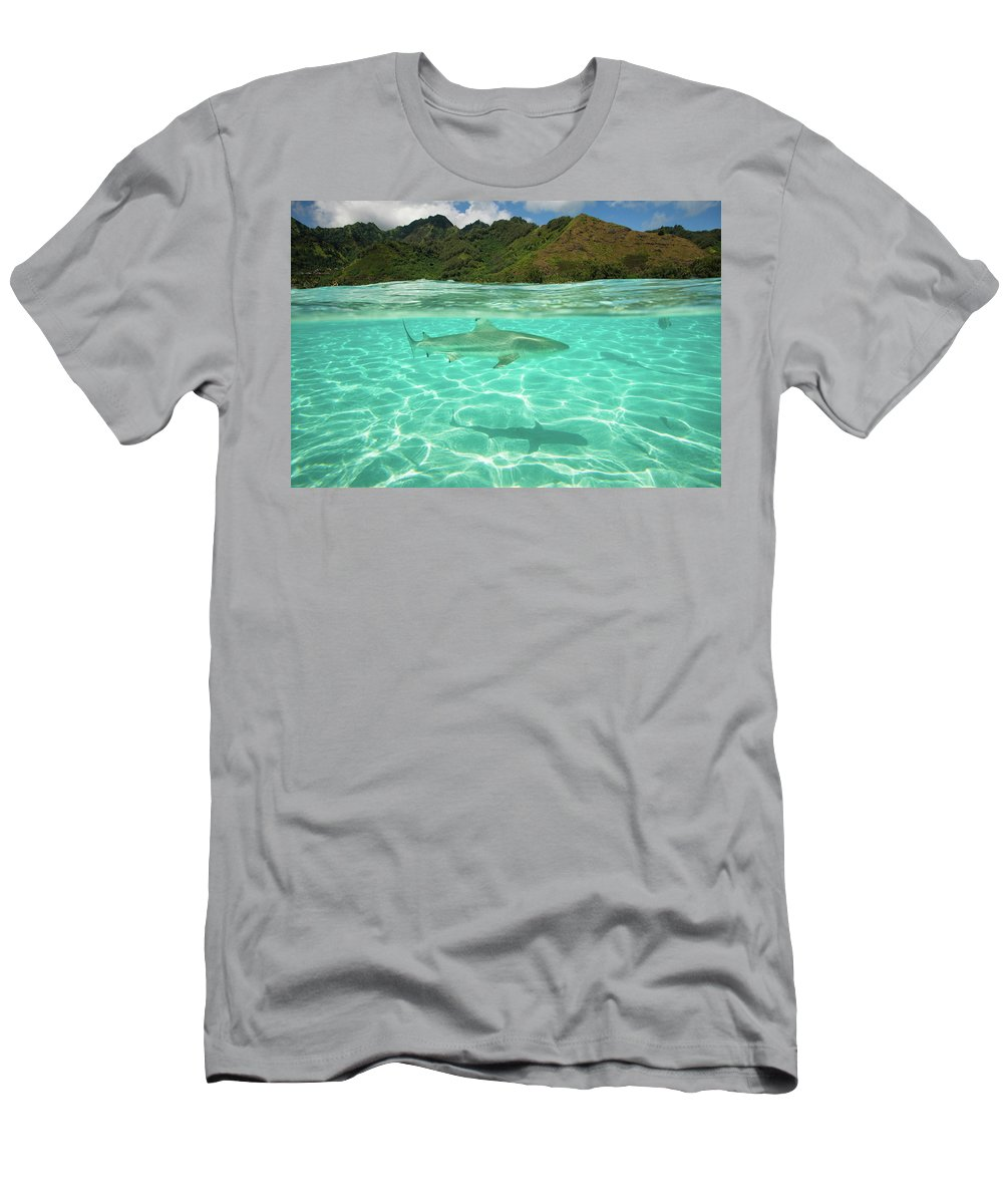 Photography Men's T-Shirt (Athletic Fit) featuring the photograph Over Under, Half Water Half Land, Shark by Panoramic Images