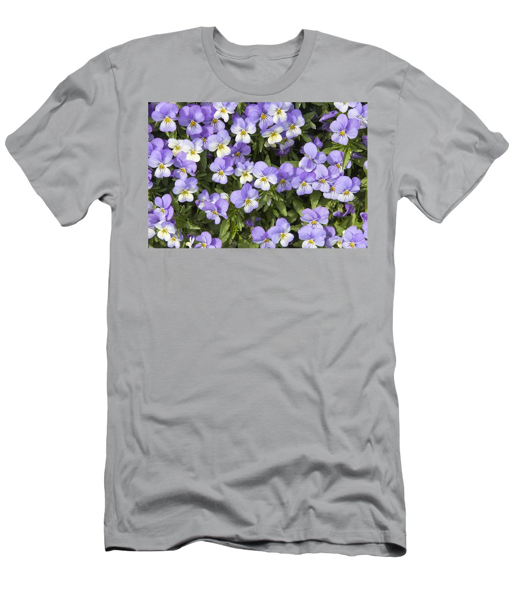 Pansy Men's T-Shirt (Athletic Fit) featuring the photograph Pansy Flowers In Spring Background by Jit Lim