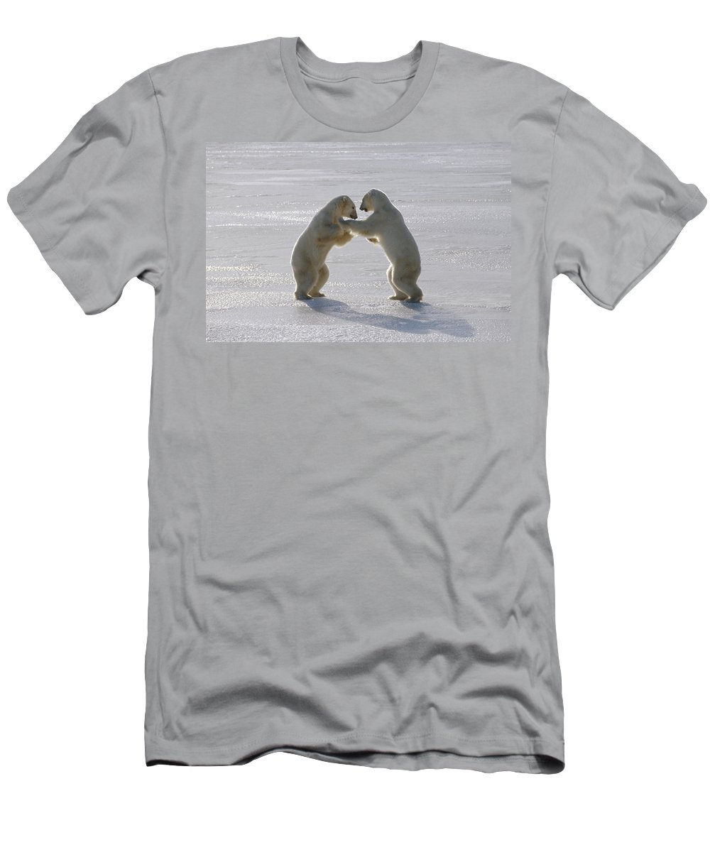 Feb0514 Men's T-Shirt (Athletic Fit) featuring the photograph Polar Bear Pair Sparring Churchill by Flip Nicklin