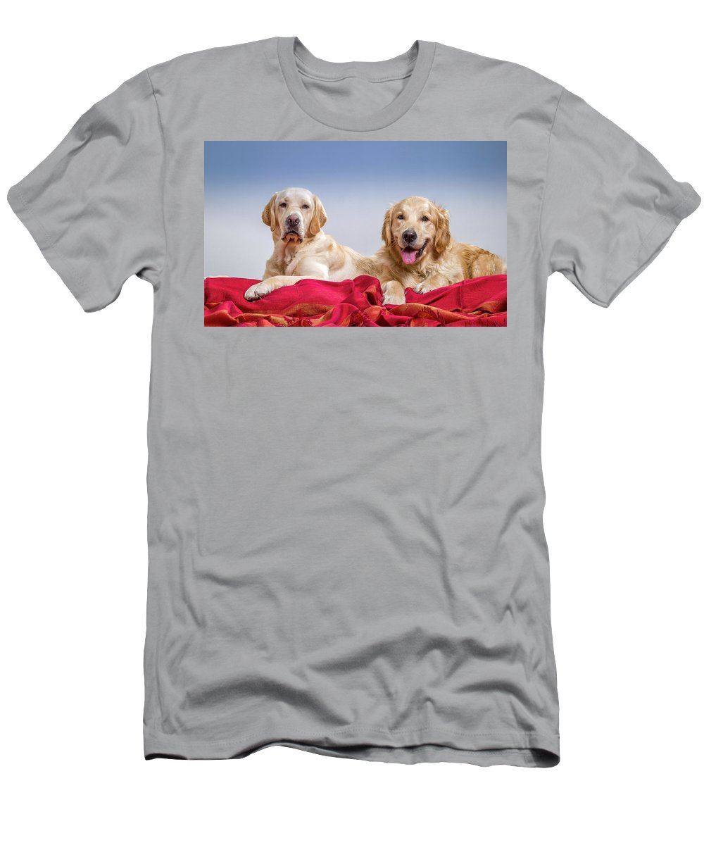 Photography Men's T-Shirt (Athletic Fit) featuring the photograph Portrait Of A Golden Retriever by Animal Images