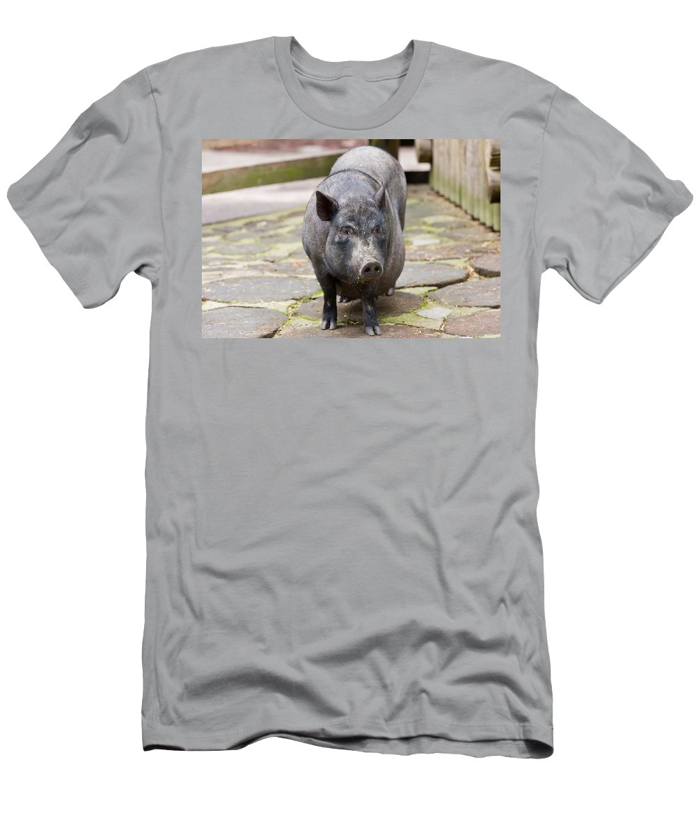 Pig Men's T-Shirt (Athletic Fit) featuring the photograph Potbelly Pig Standing by Pati Photography