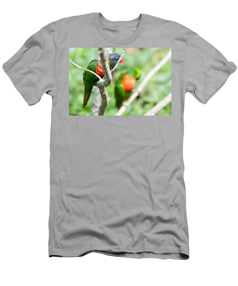 Bird Men's T-Shirt (Athletic Fit) featuring the photograph Rainbow Lorikeet Parrot Trichoglossus Haematodus by Alex Grichenko