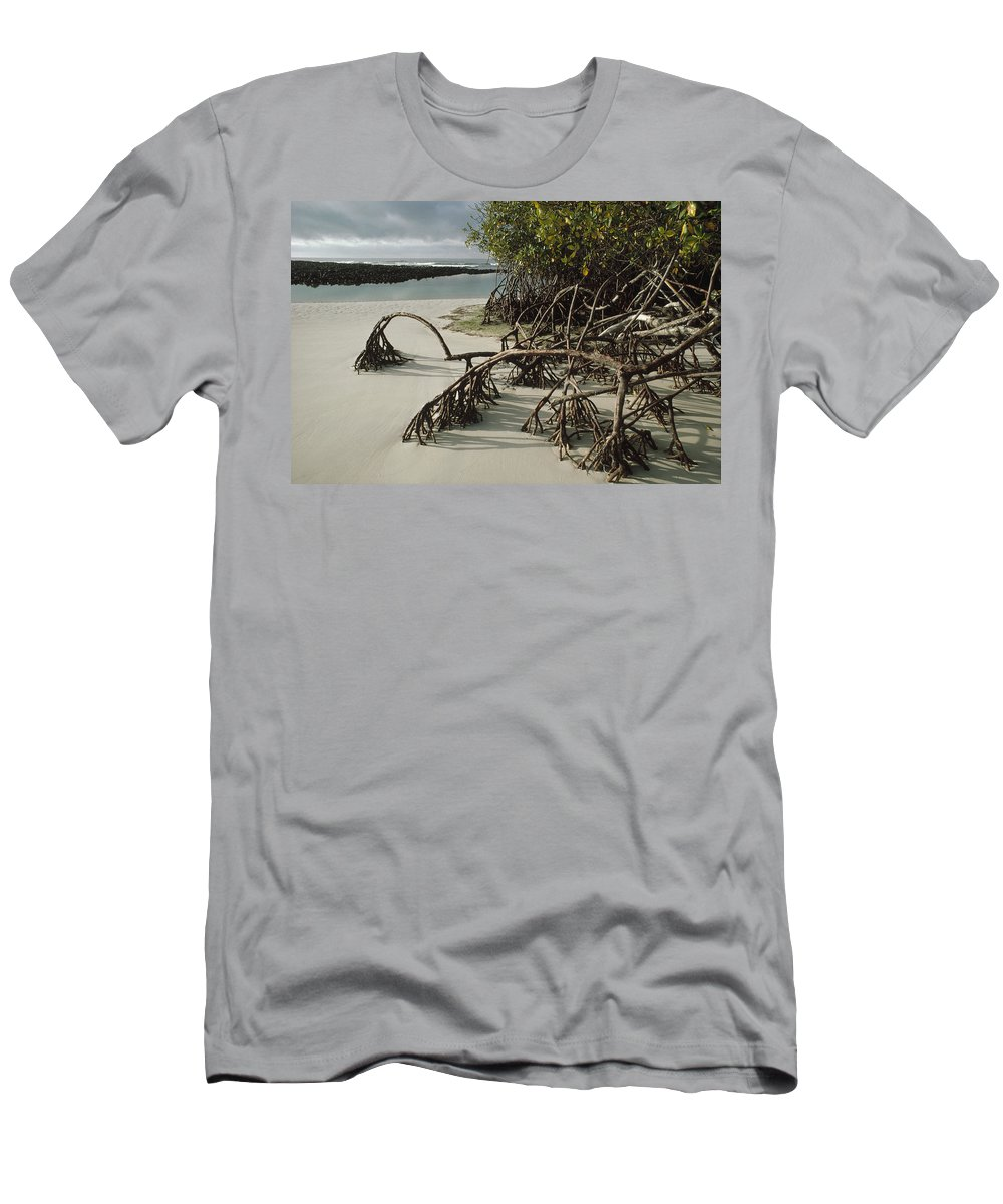 Feb0514 Men's T-Shirt (Athletic Fit) featuring the photograph Red Mangrove Root Galapagos Islands by Tui De Roy