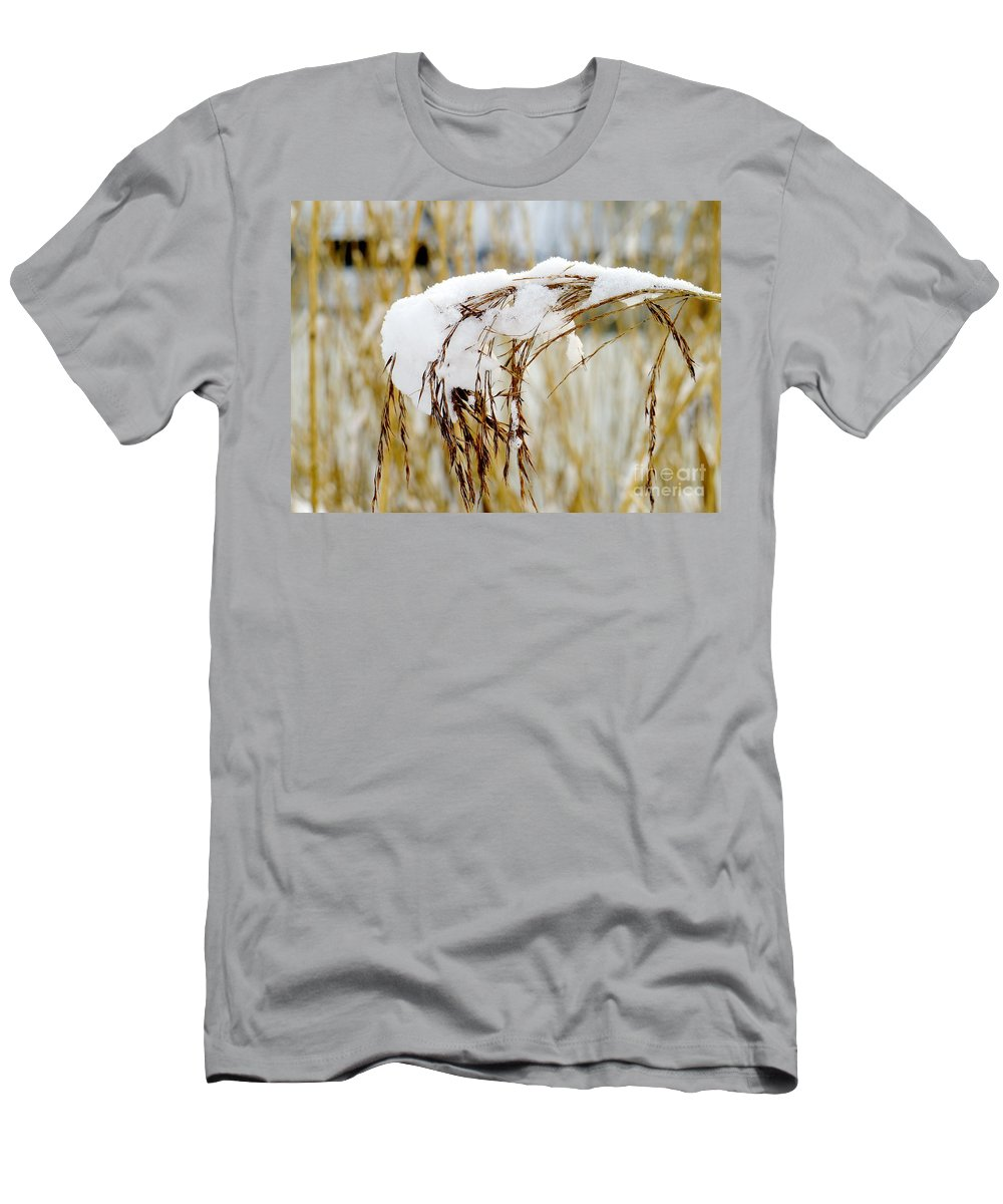 Snow Men's T-Shirt (Athletic Fit) featuring the photograph Reed With Snow by John Chatterley