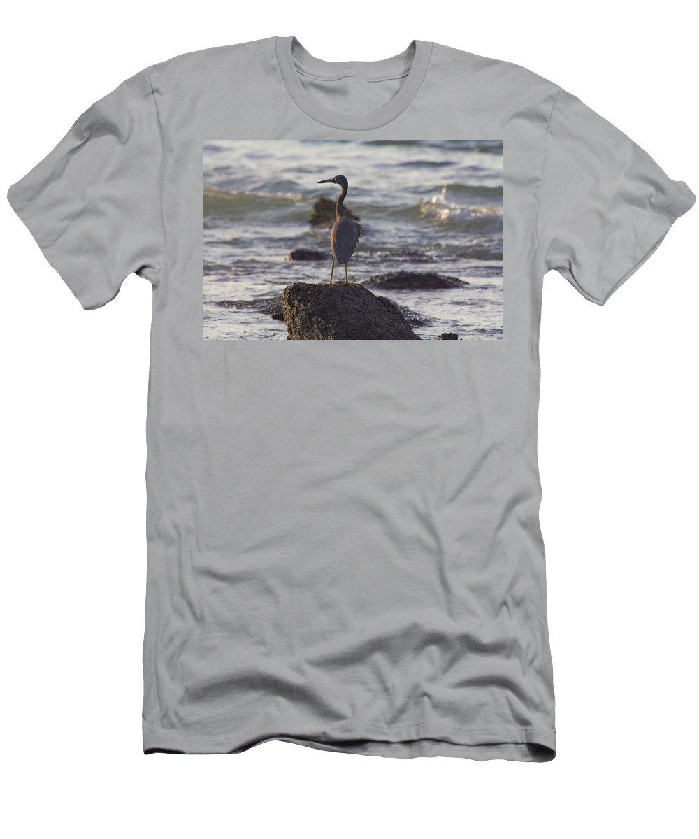 Reef Egret T-Shirt featuring the photograph Reef Egret by Douglas Barnard