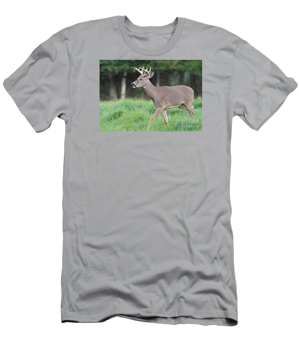 Amble Men's T-Shirt (Athletic Fit) featuring the photograph Rival Spotted by Kevin McCarthy