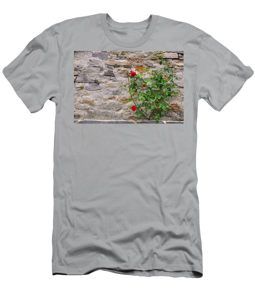 Roses Men's T-Shirt (Athletic Fit) featuring the photograph Roses On A Stone Wall by Mats Silvan