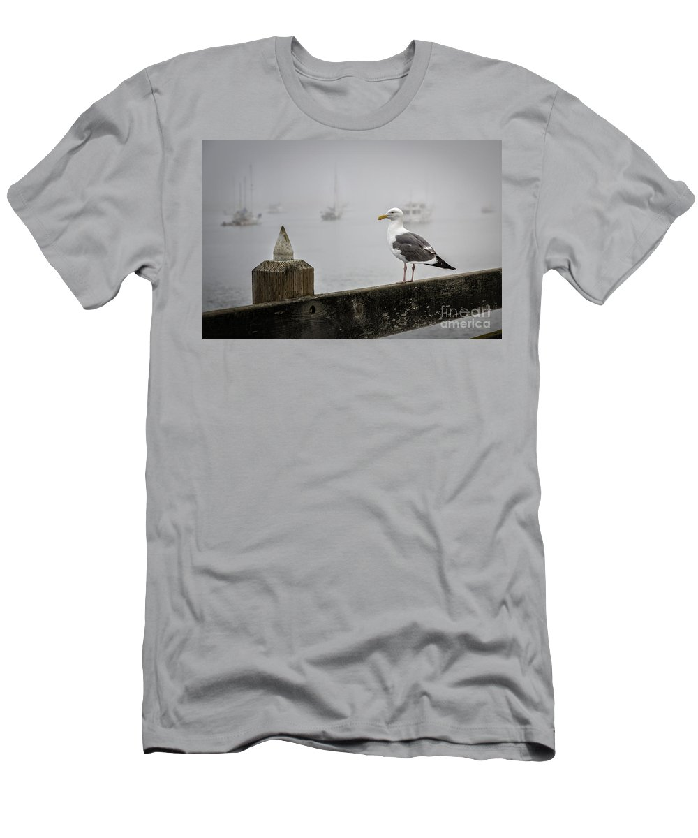 Los Osos Men's T-Shirt (Athletic Fit) featuring the photograph Seagull In Fog 1 by Timothy Hacker