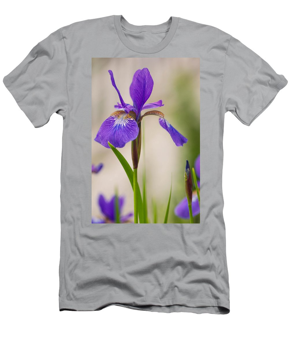 Iris Men's T-Shirt (Athletic Fit) featuring the photograph Siberian Iris Blossom by Amy Porter