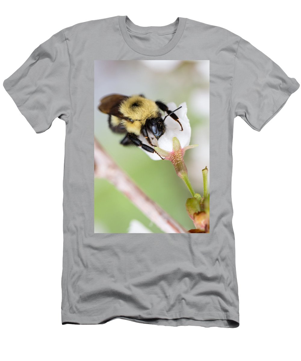 Antenna Men's T-Shirt (Athletic Fit) featuring the photograph Sipping Nectar by Gaurav Singh