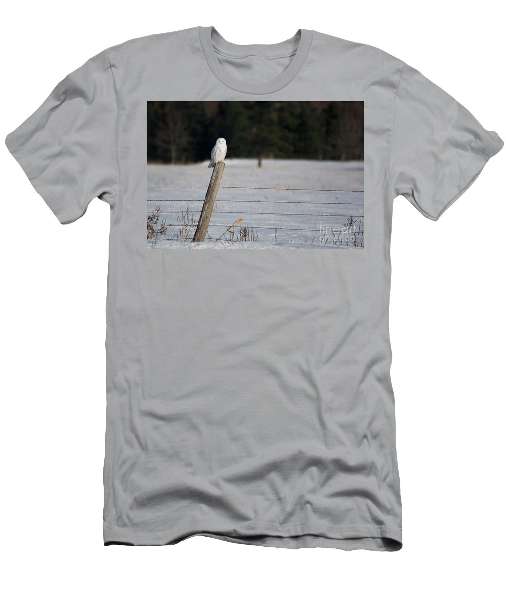 Snowy Owl Men's T-Shirt (Athletic Fit) featuring the photograph Snowy Owl Landscape by Cheryl Baxter
