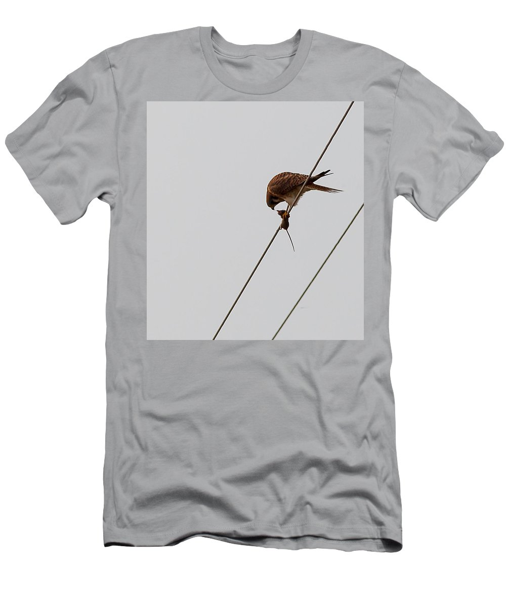 Sparrow Hawk Men's T-Shirt (Athletic Fit) featuring the photograph Sparrow Hawk by Brian Williamson