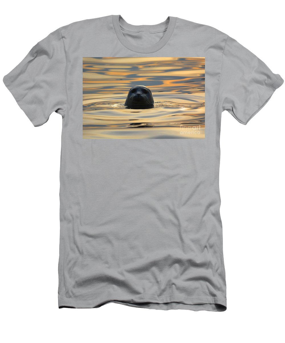 Seal Men's T-Shirt (Athletic Fit) featuring the photograph Sunset Seal by Deanna Cagle