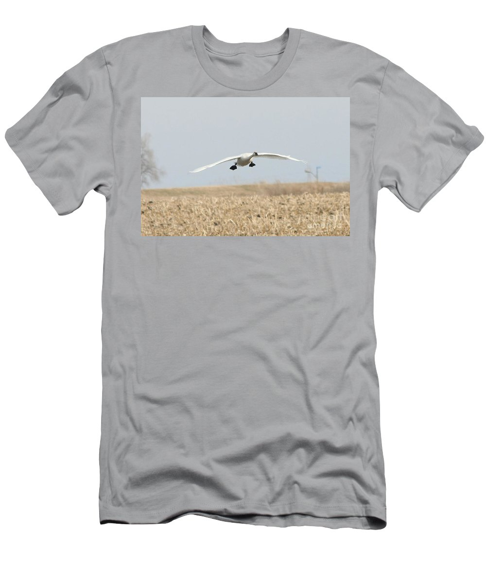 Swan Men's T-Shirt (Athletic Fit) featuring the photograph Swan Coming In For A Landing by Lori Tordsen