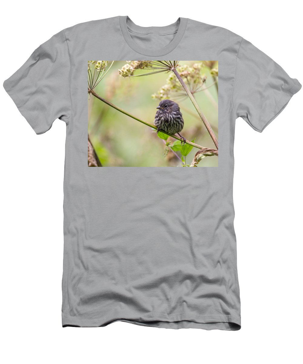 Doug Lloyd Men's T-Shirt (Athletic Fit) featuring the photograph Sweet Baby by Doug Lloyd