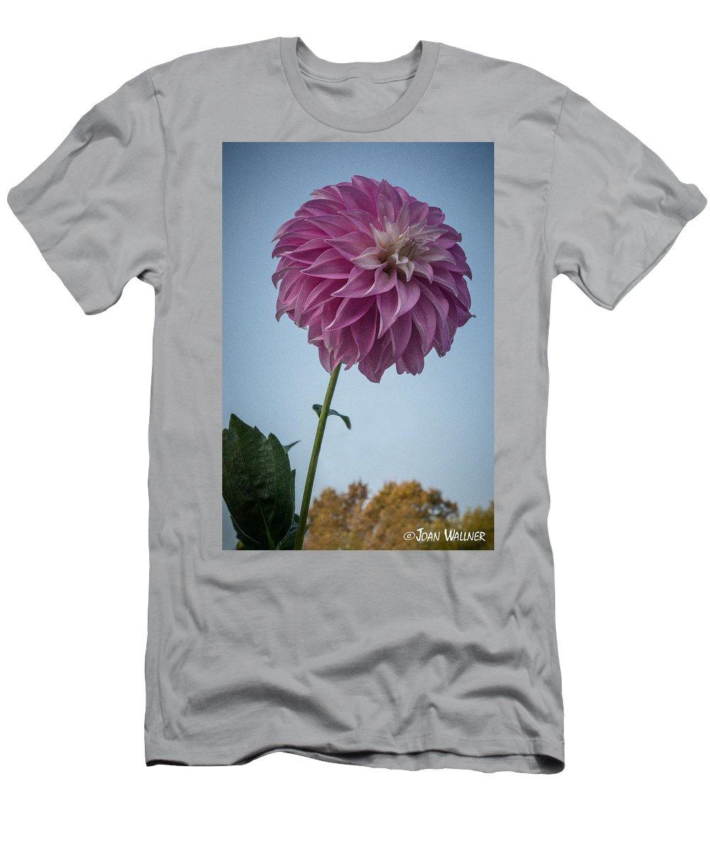 Dahlia Men's T-Shirt (Athletic Fit) featuring the photograph Tall Dahlia by Joan Wallner
