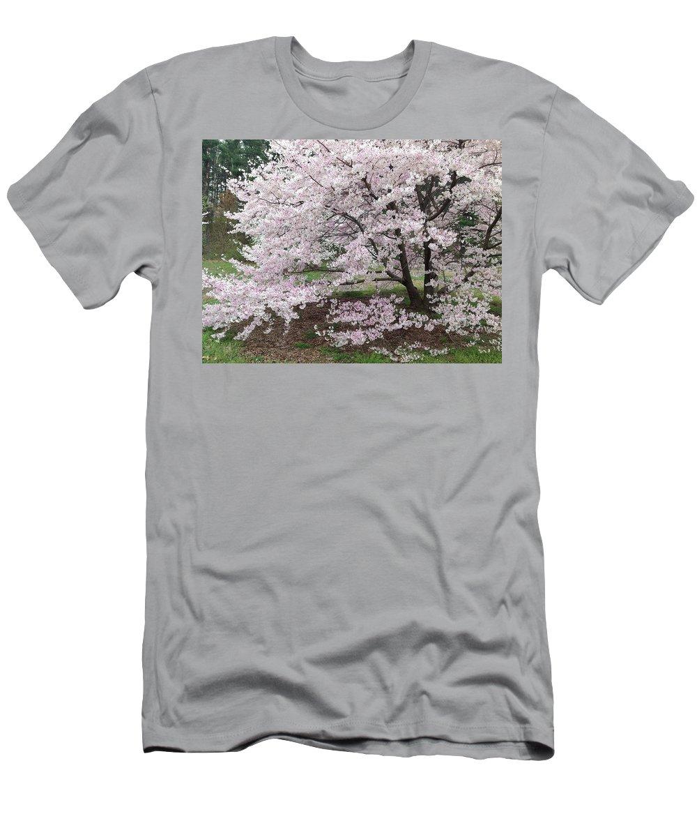 Arboretum Men's T-Shirt (Athletic Fit) featuring the photograph The Arboretum Cherry Blossoms by Lois Ivancin Tavaf