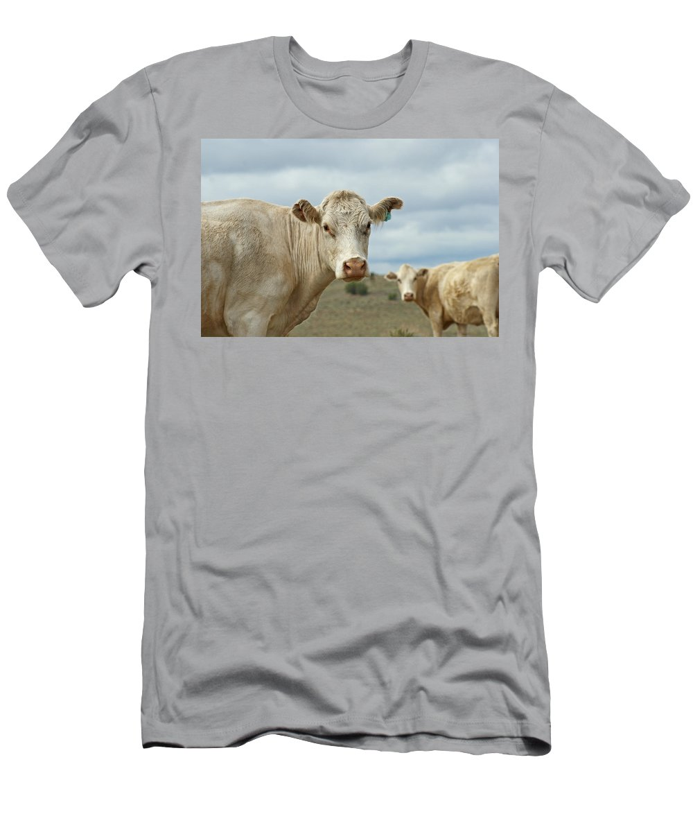 Cow Men's T-Shirt (Athletic Fit) featuring the photograph The Cows by Ernie Echols