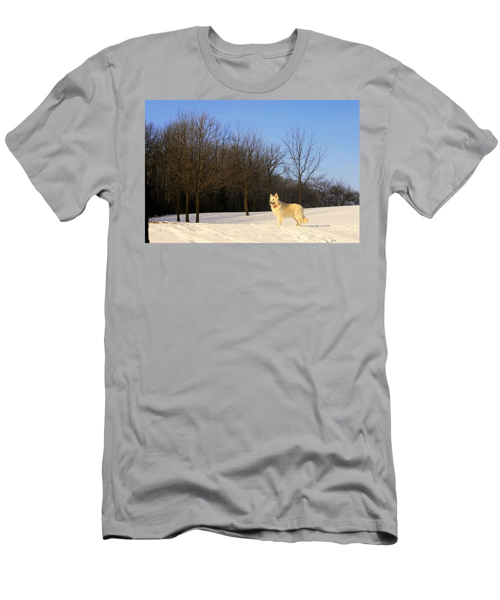 White Shepherd Men's T-Shirt (Athletic Fit) featuring the photograph The Dog On The Hill by Kay Novy