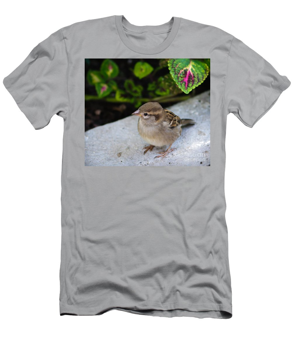 Birds Men's T-Shirt (Athletic Fit) featuring the photograph The Lilttle Beggar by Charles Dobbs