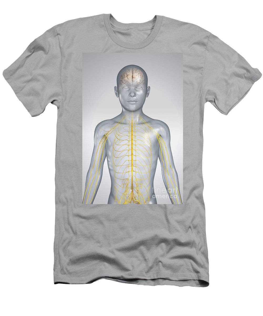 Transparency Men's T-Shirt (Athletic Fit) featuring the photograph The Nervous System Child by Science Picture Co