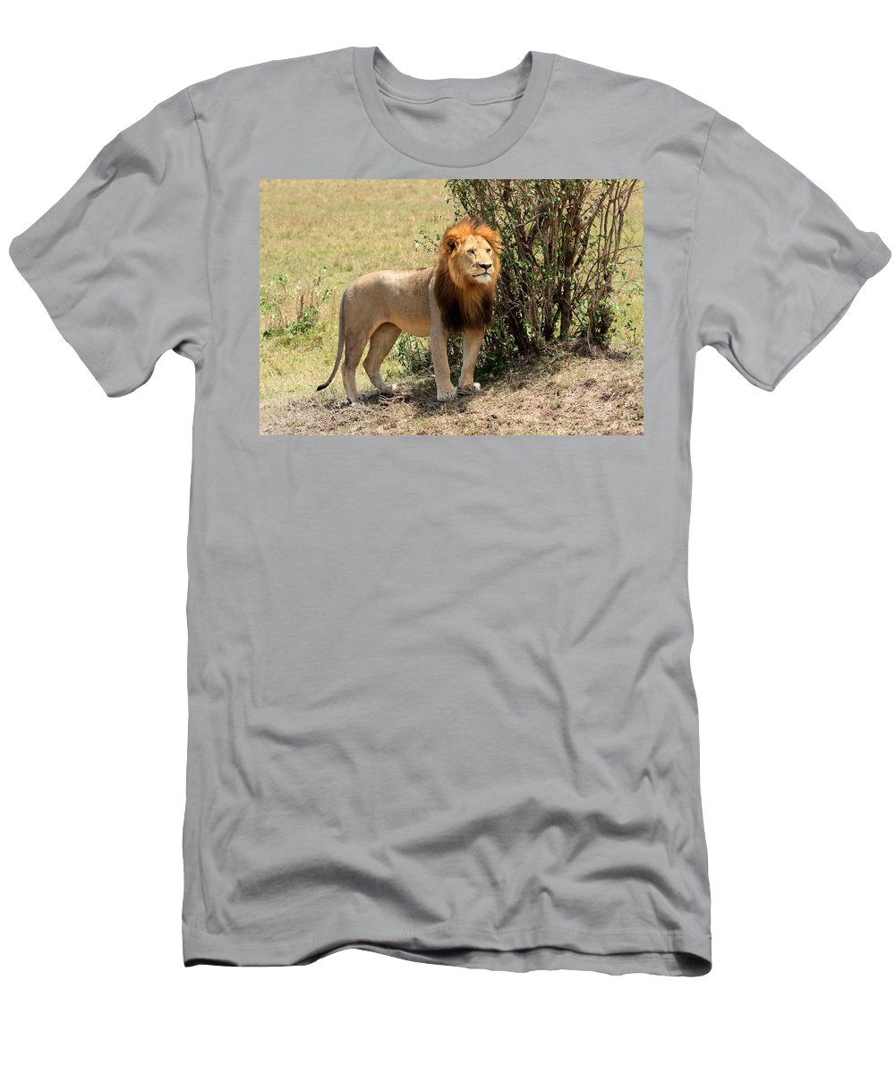 Africa Men's T-Shirt (Athletic Fit) featuring the photograph King Of The Savannah by Aidan Moran