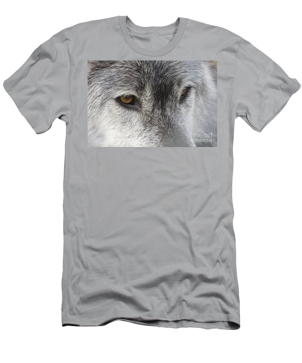 Wolf Men's T-Shirt (Athletic Fit) featuring the photograph The Silver Gleam by Christina Gupfinger