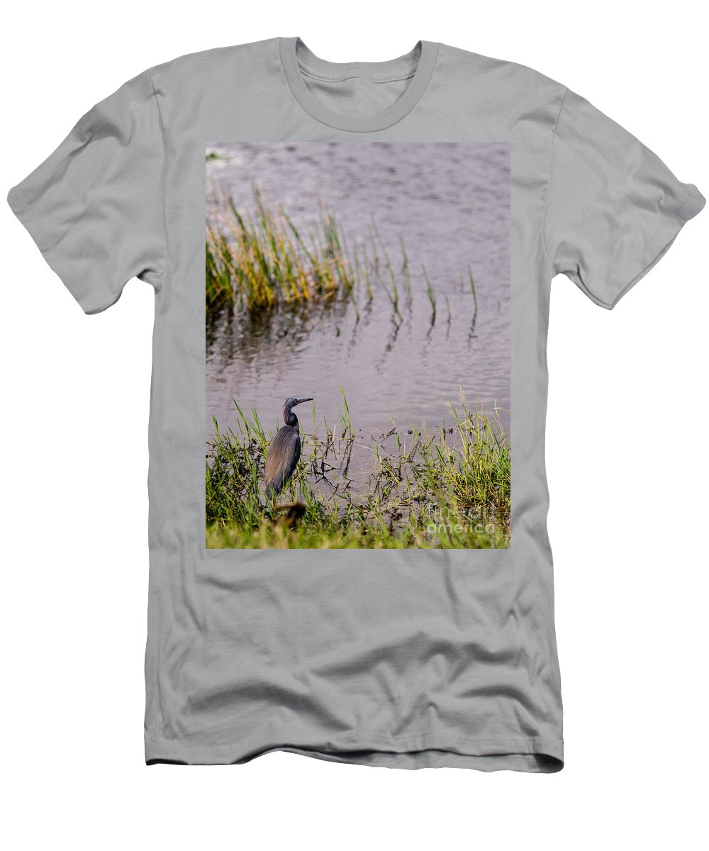 Anhinga Trail Men's T-Shirt (Athletic Fit) featuring the photograph Tricolored Heron by Tracy Knauer