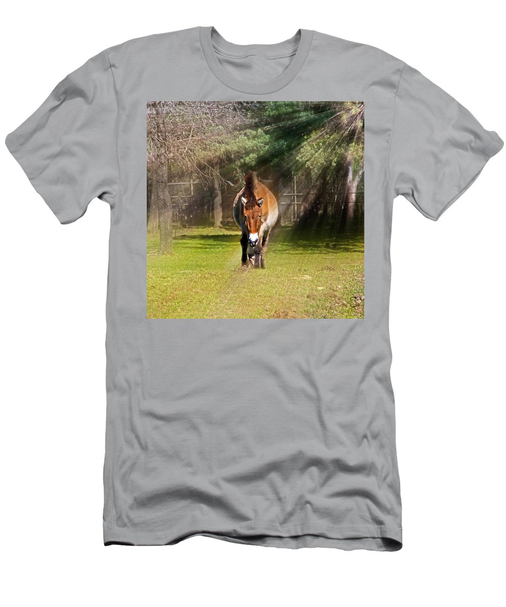 #przewalski's Horse Men's T-Shirt (Athletic Fit) featuring the photograph Walking Towards Me In Sunrays by Miroslava Jurcik