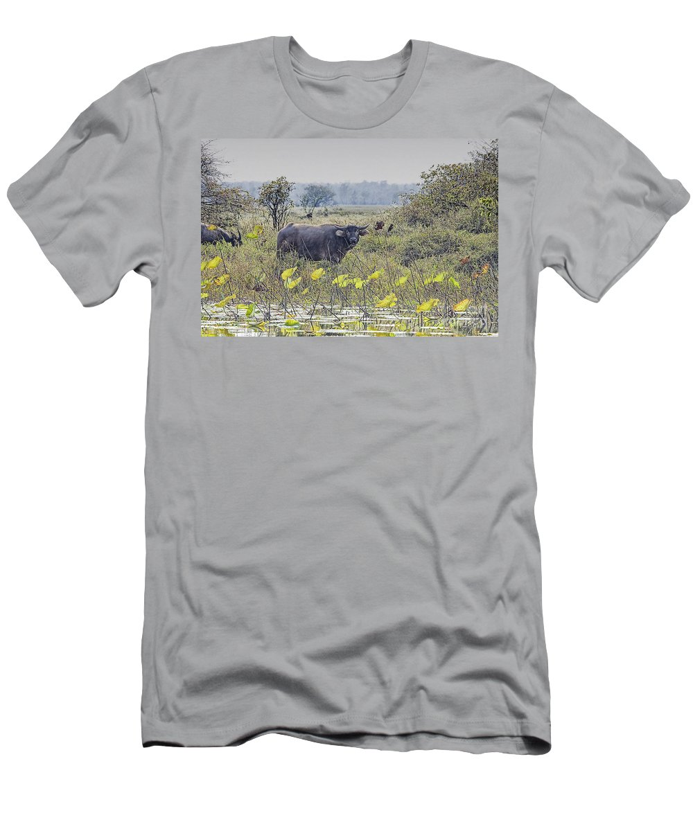 Water Buffalo Men's T-Shirt (Athletic Fit) featuring the photograph Water Buffaloes At Corroboree Billabong by Douglas Barnard