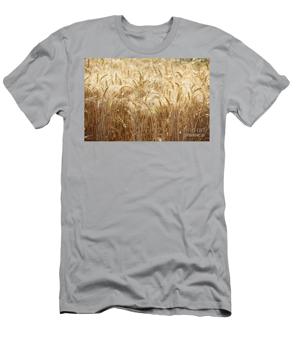 Wheat Men's T-Shirt (Athletic Fit) featuring the photograph Wheat Field by Oren Shalev