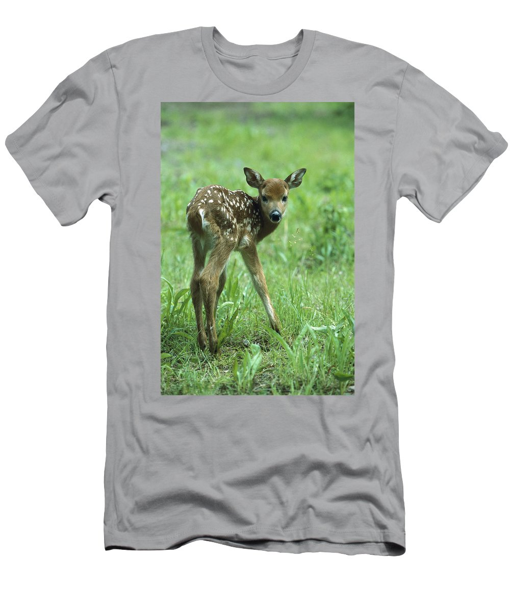 Feb0514 Men's T-Shirt (Athletic Fit) featuring the photograph White-tailed Deer Fawn Meadow by Konrad Wothe
