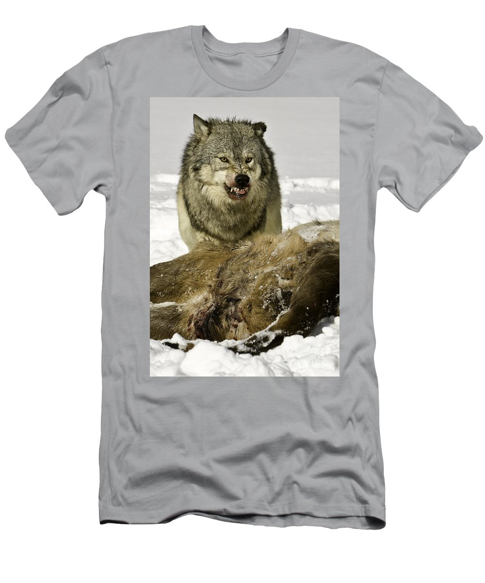 Elk Men's T-Shirt (Athletic Fit) featuring the photograph Wolf Protecting Kill by Jerry Fornarotto
