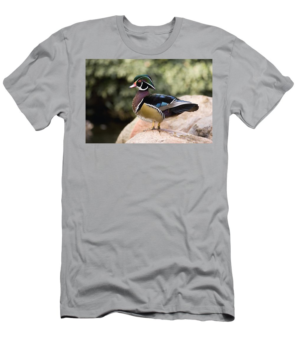 Feb0514 Men's T-Shirt (Athletic Fit) featuring the photograph Wood Duck Drake In Breeding Plumage by Tom Vezo