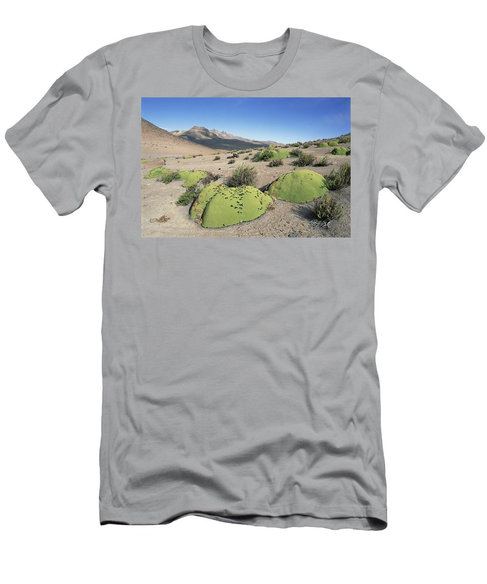Feb0514 Men's T-Shirt (Athletic Fit) featuring the photograph Yareta Pata Pampa Peru by Tui De Roy