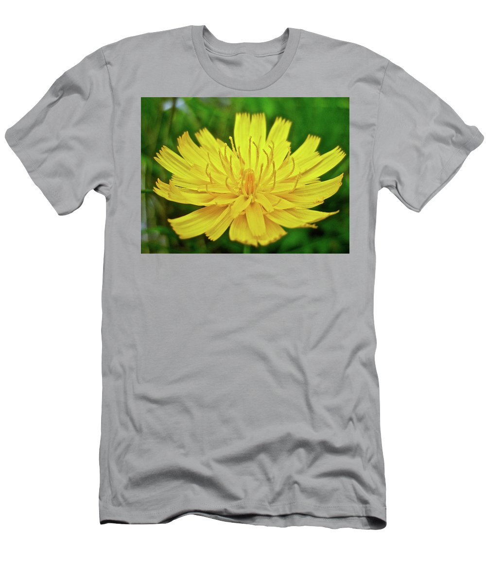 Hawkweed Men's T-Shirt (Athletic Fit) featuring the photograph Yellow Hawkweed - Hieracium Caespitosum by Mother Nature