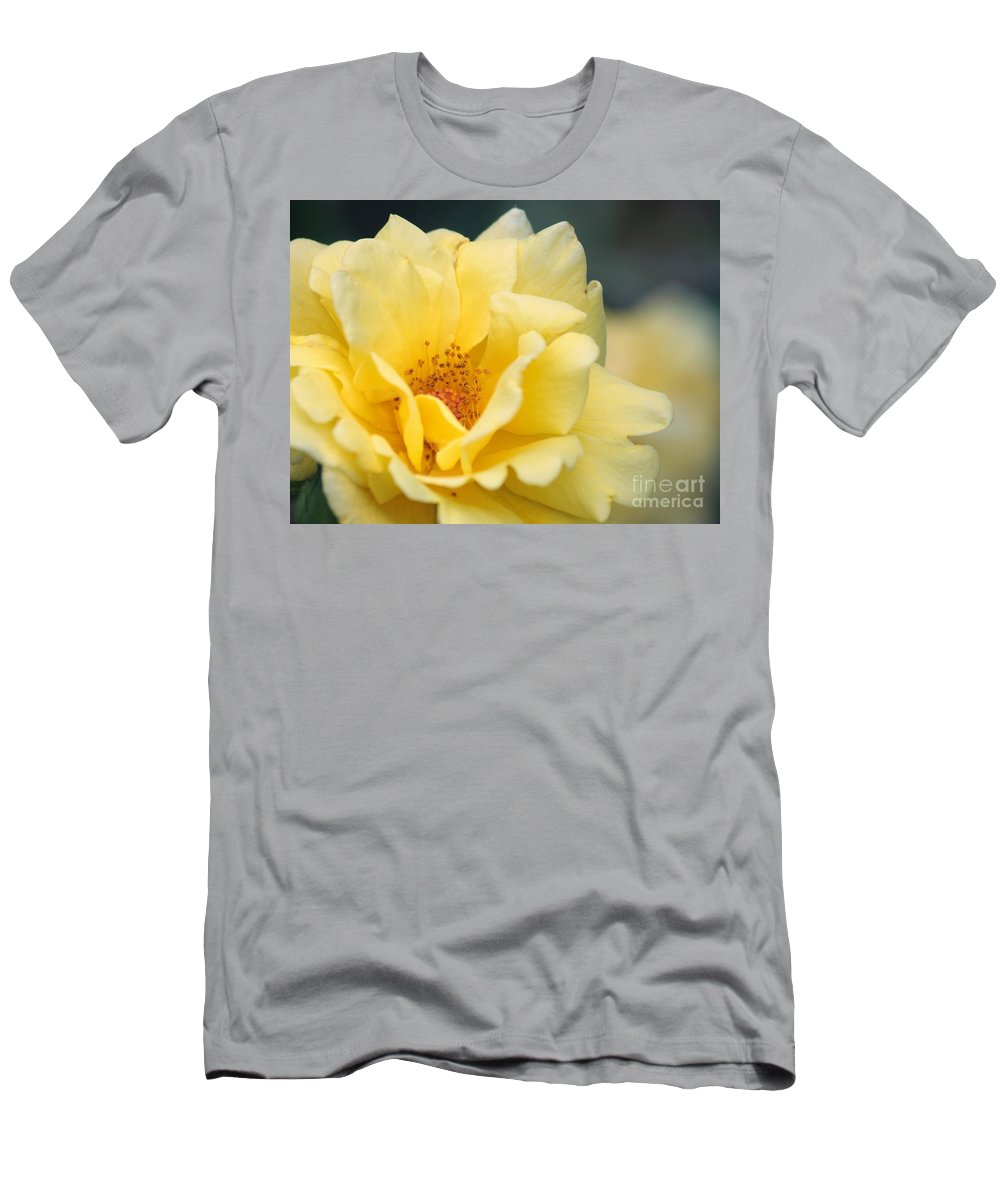 Rose Men's T-Shirt (Athletic Fit) featuring the photograph Yellow Rose Macro by Carol Groenen