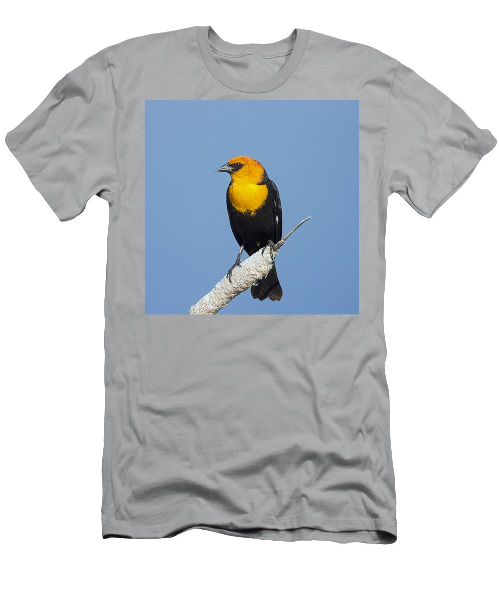 Yellow Headed Blackbird Men's T-Shirt (Athletic Fit) featuring the photograph Yellowheaded Blackbird by Jack Bell