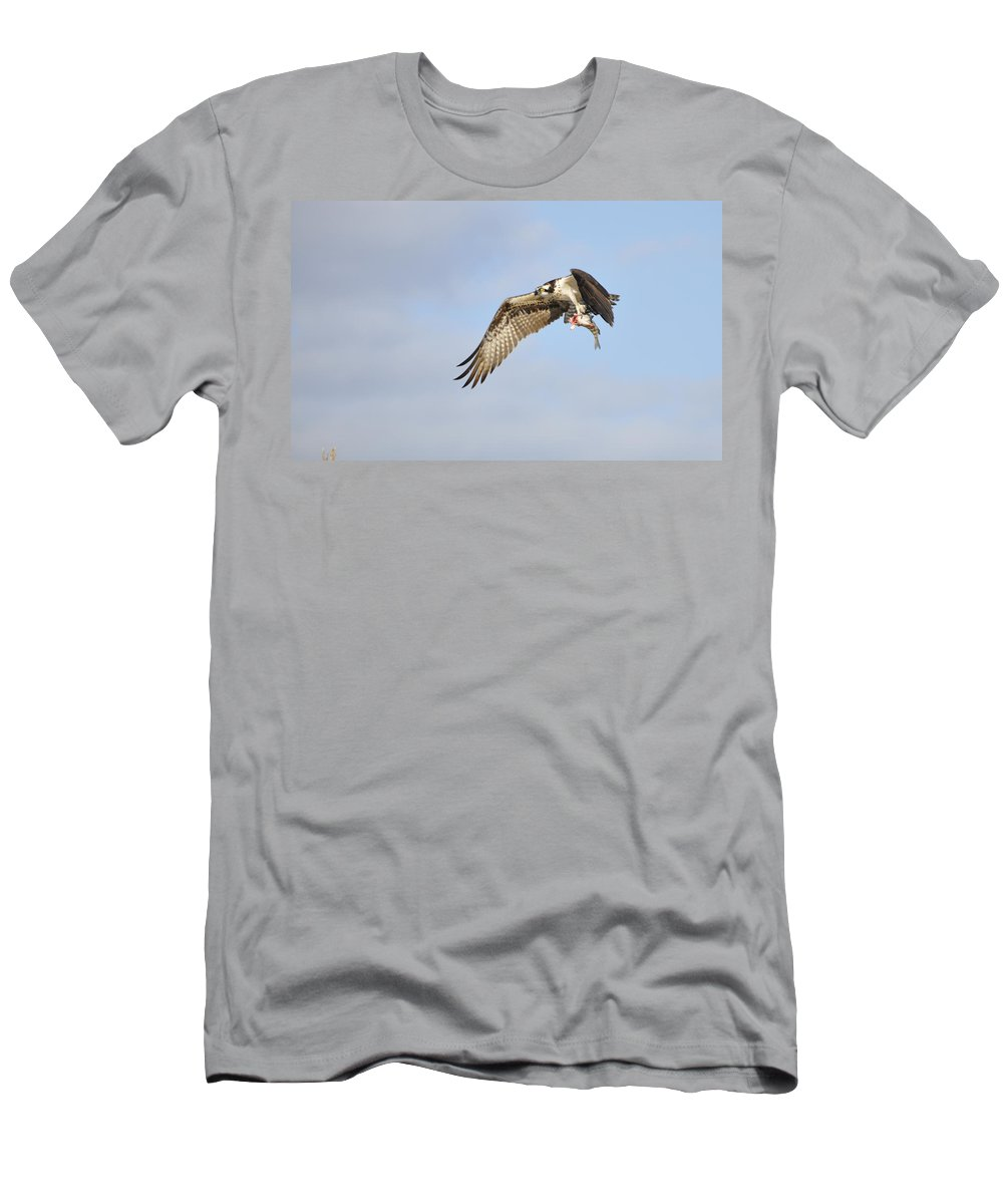 Osprey T-Shirt featuring the photograph Osprey Lunch To Go I by Christine Stonebridge